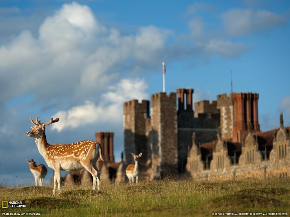 241 990x742 Лучшие фото ноября от National Geographic