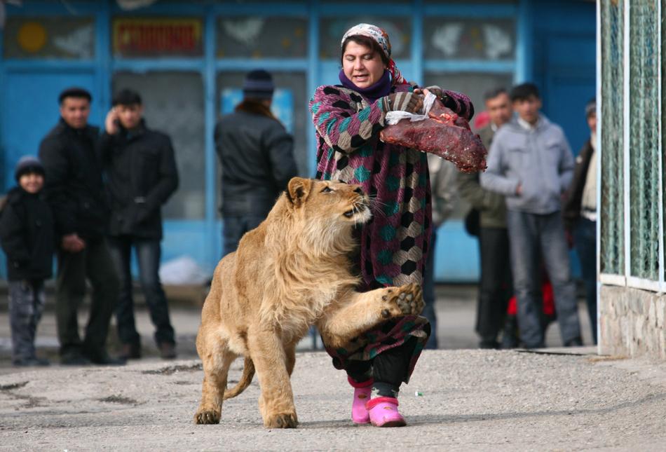 2420 50 лучших фотографий животных за 2011 год