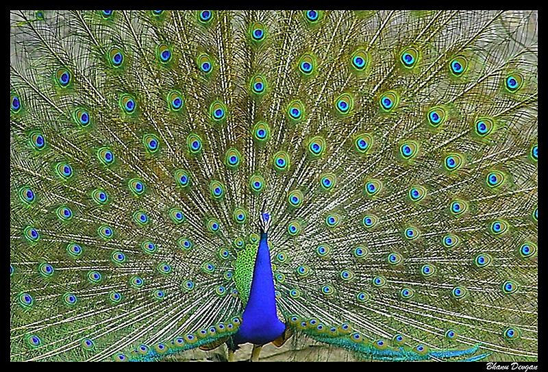 2441 40 прекрасных фотографий птиц