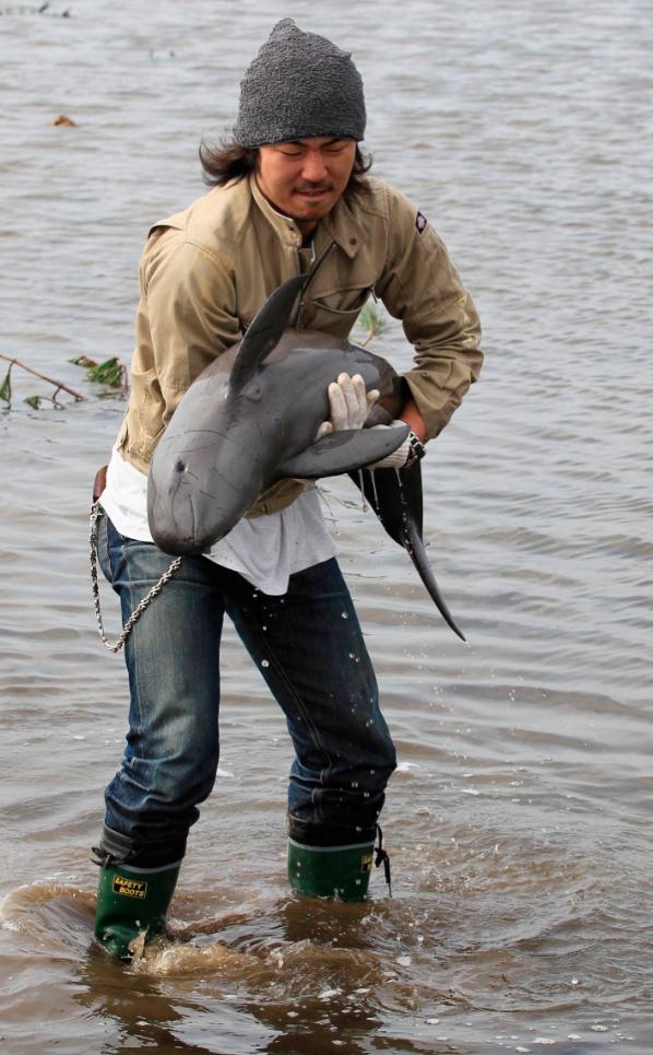 2519 50 лучших фотографий животных за 2011 год