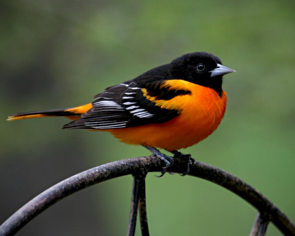 2540 40 прекрасных фотографий птиц