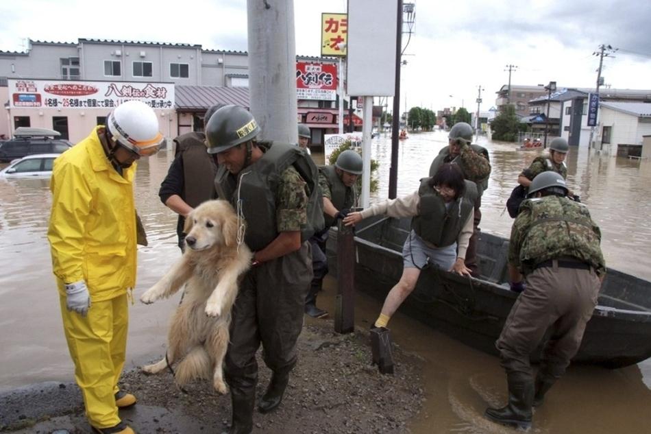 2619 50 лучших фотографий животных за 2011 год