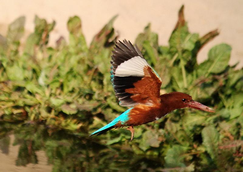 2639 40 прекрасных фотографий птиц