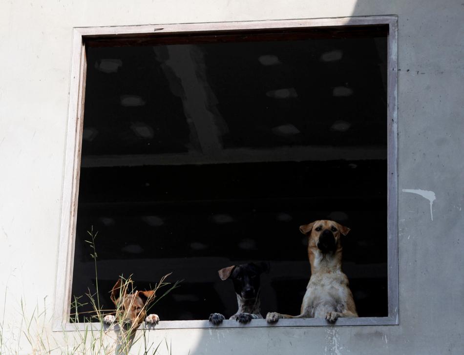 2718 50 лучших фотографий животных за 2011 год