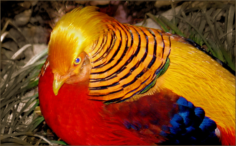 2736 40 прекрасных фотографий птиц