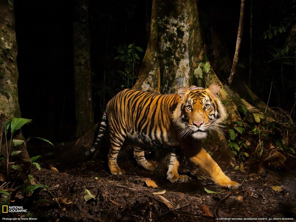 281 990x742 Лучшие фото ноября от National Geographic