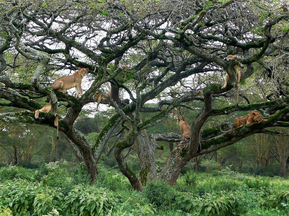 2817 50 лучших фотографий животных за 2011 год