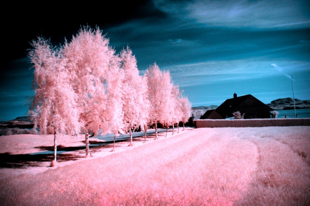 2842 Инфракрасная фотография