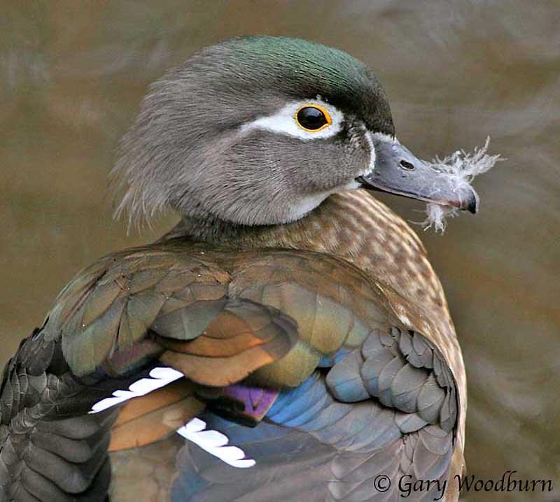 2935 40 прекрасных фотографий птиц