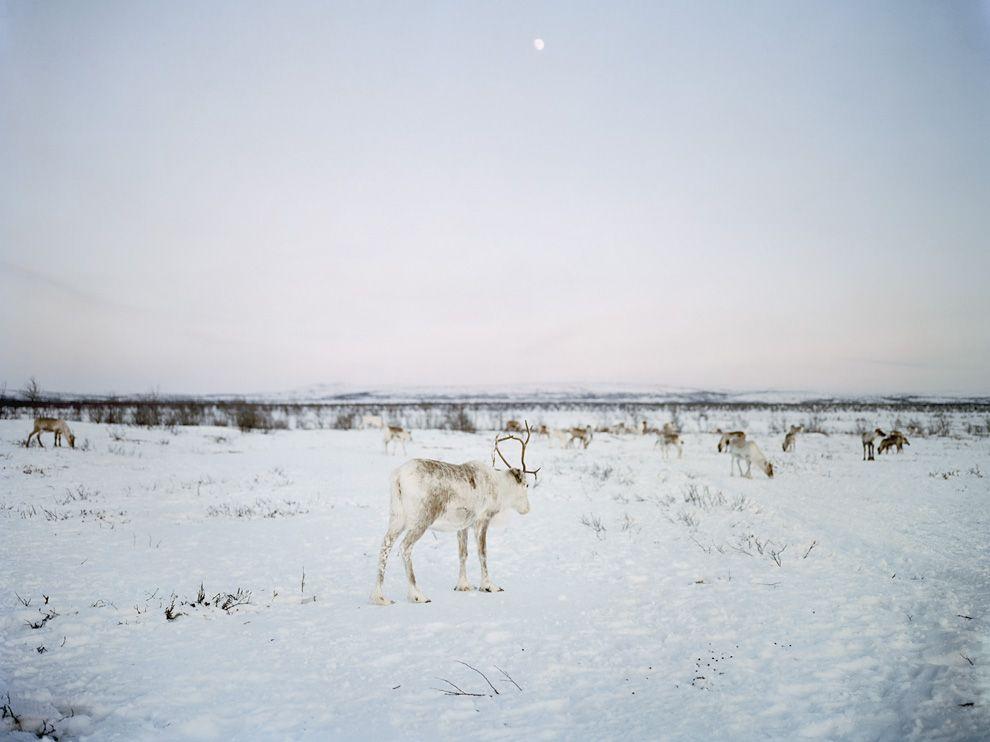 30 Лучшие фото ноября от National Geographic