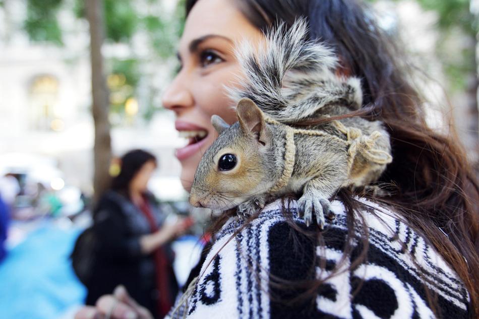3015 50 лучших фотографий животных за 2011 год