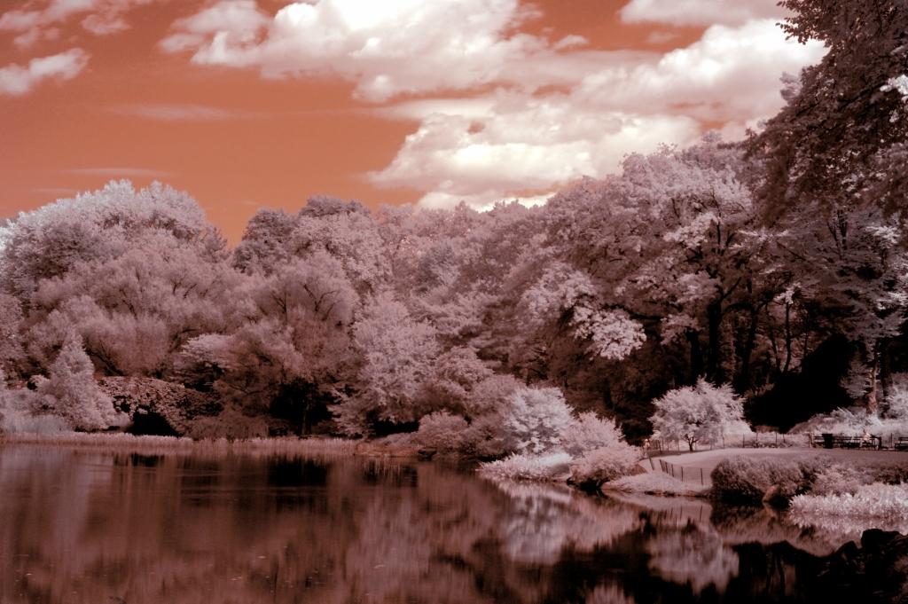 3039 Инфракрасная фотография