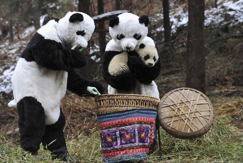 3102 50 лучших фотографий животных за 2011 год