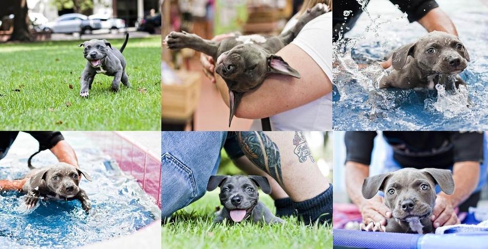 3121 50 лучших фотографий животных за 2011 год
