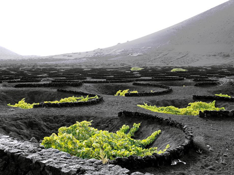 3159 Вулканические виноградники острова Лансароте