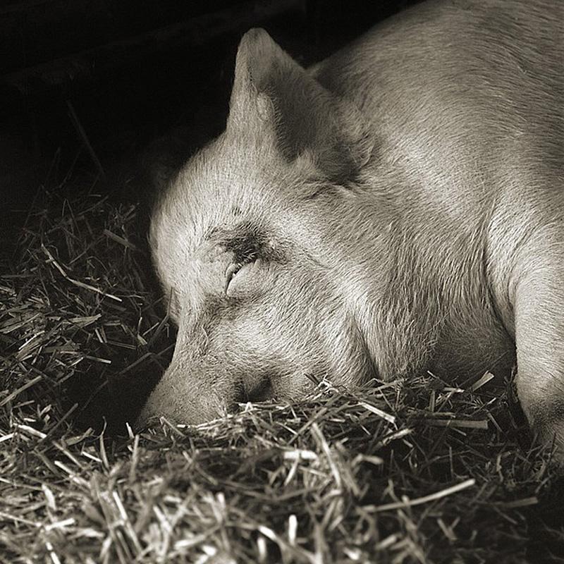 3169 Фотопроект Исы Лешко Пожилые животные