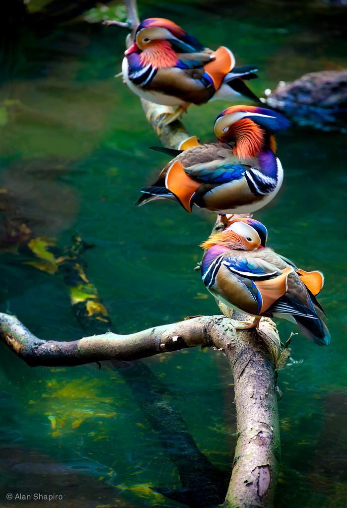 3181 40 прекрасных фотографий птиц