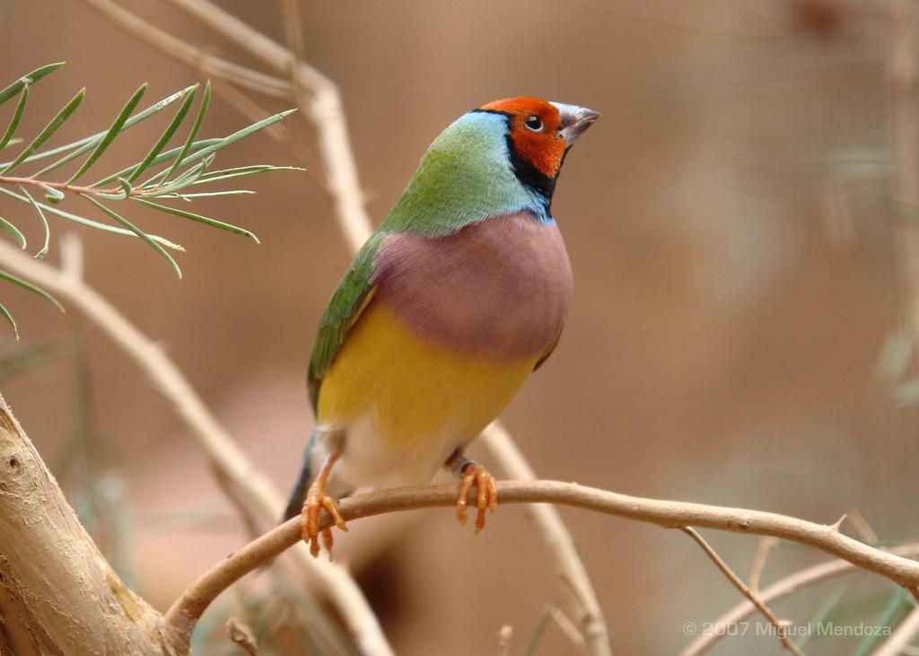 3182 40 прекрасных фотографий птиц