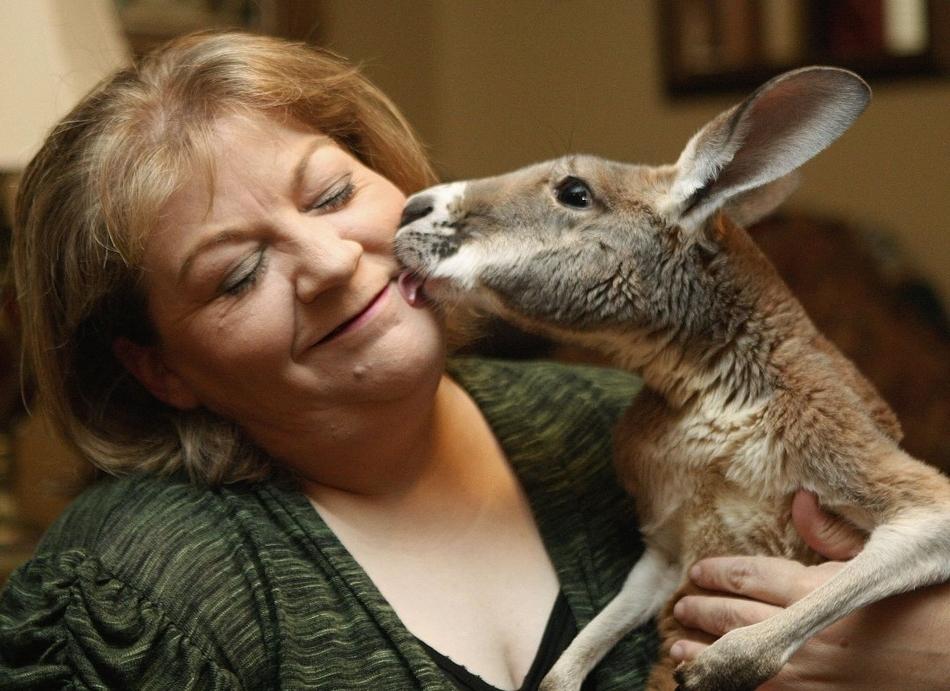 3219 50 лучших фотографий животных за 2011 год