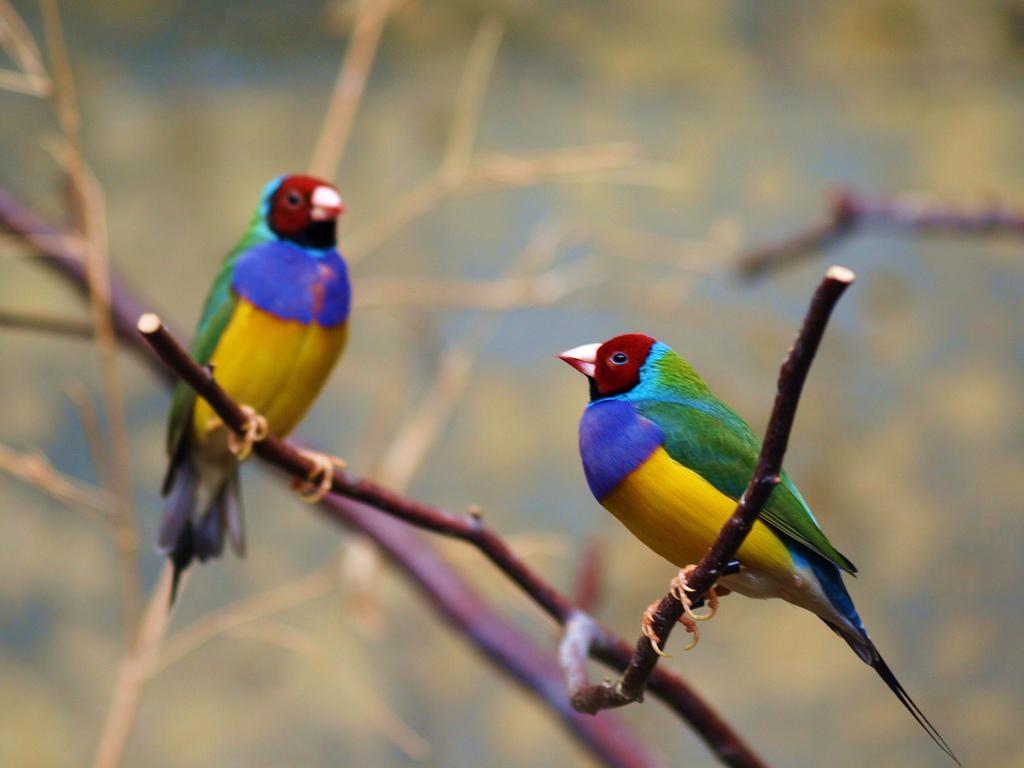 3235 40 прекрасных фотографий птиц