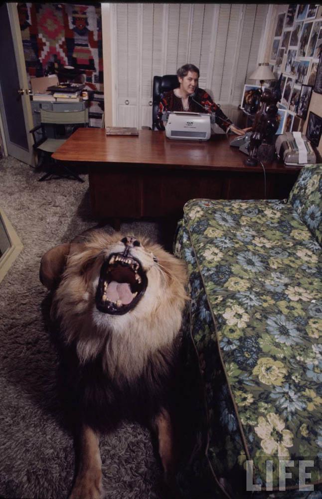 3290 Лев в качестве домашнего питомца