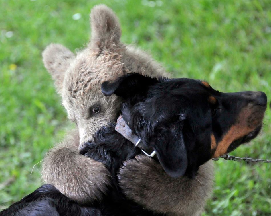 3317 50 лучших фотографий животных за 2011 год