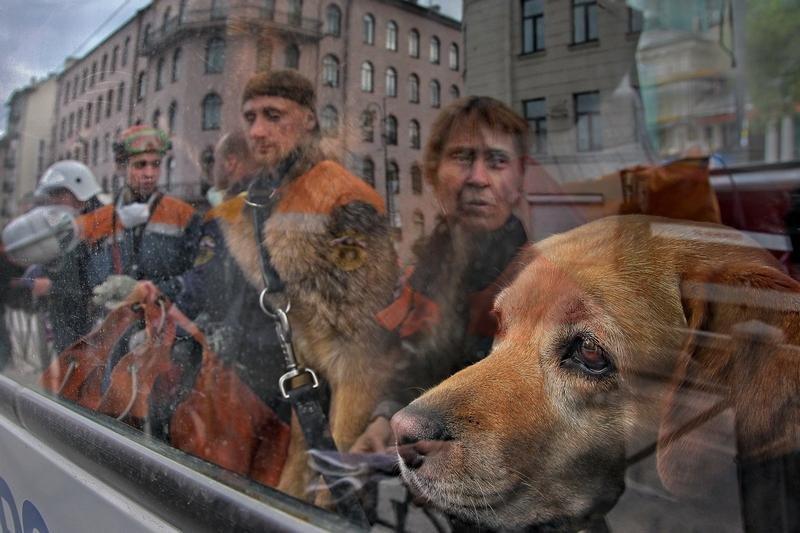 3320 Сцены из российской жизни глазами Александра Петросяна