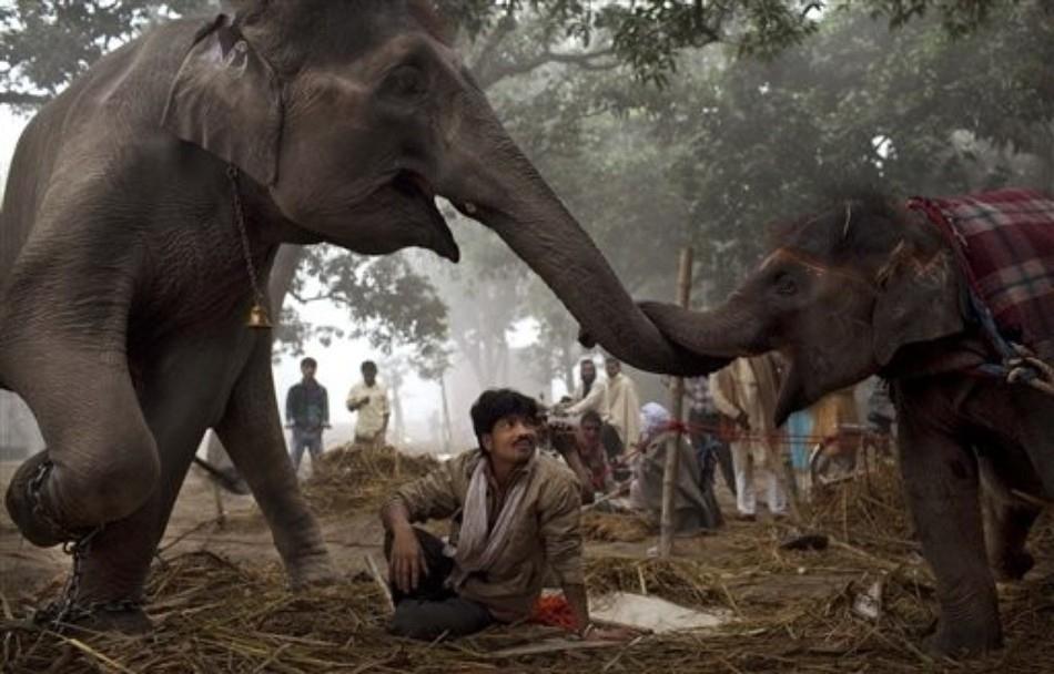 3417 50 лучших фотографий животных за 2011 год