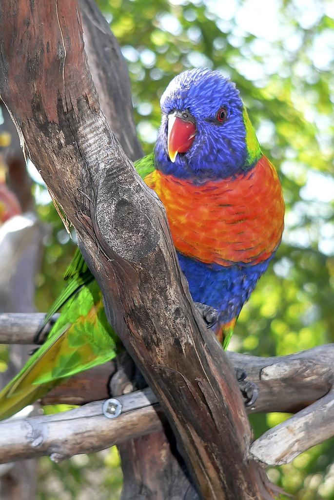 3432 40 прекрасных фотографий птиц
