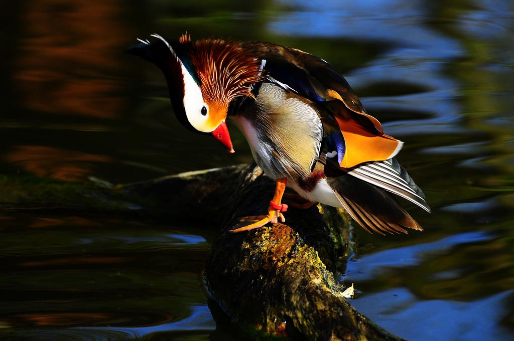 3530 40 прекрасных фотографий птиц