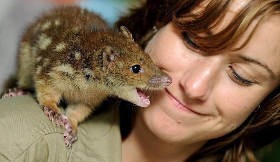 3614 50 лучших фотографий животных за 2011 год