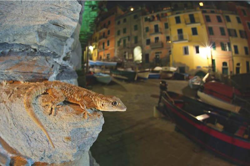 367 Лучшие фотографии дикой природы 2011