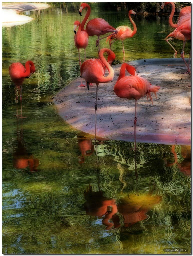 3725 40 прекрасных фотографий птиц