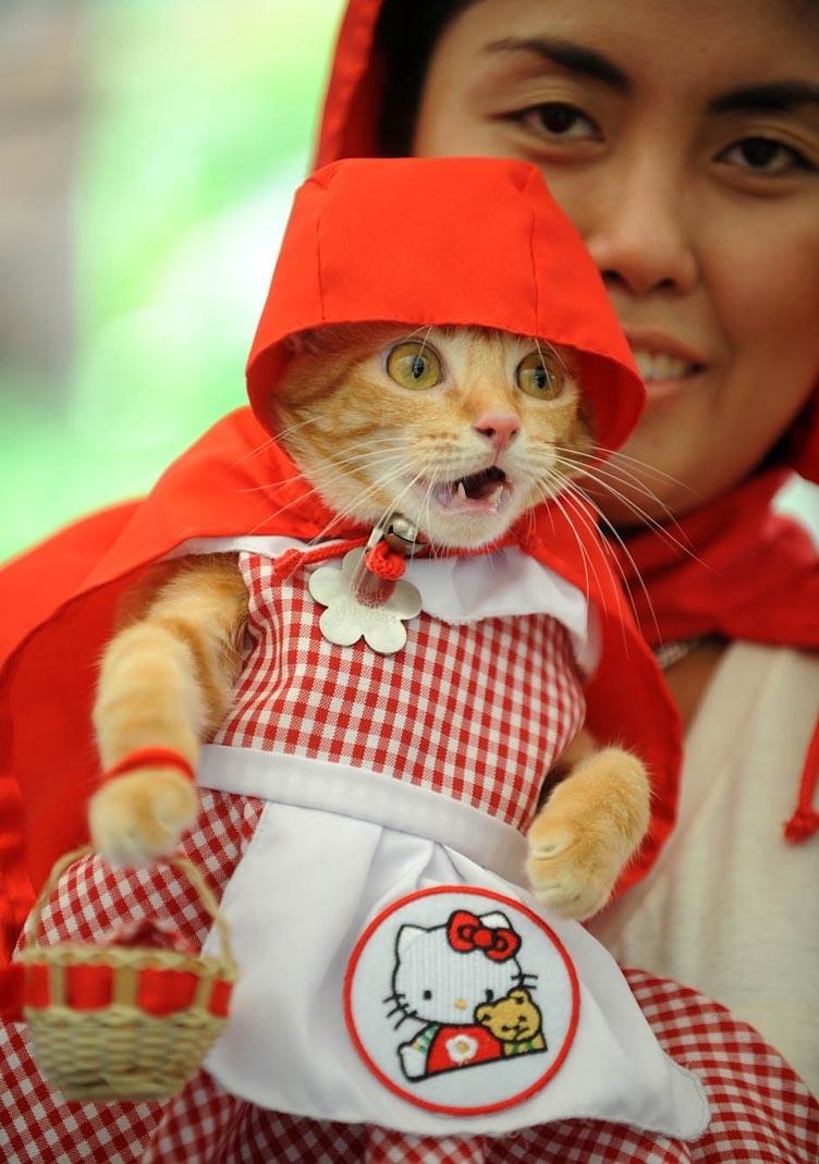 3812 50 лучших фотографий животных за 2011 год