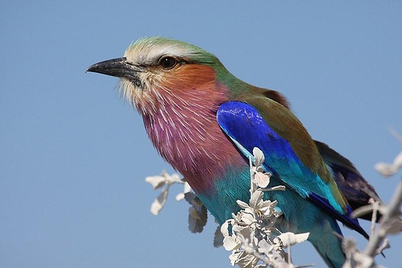 3823 40 прекрасных фотографий птиц