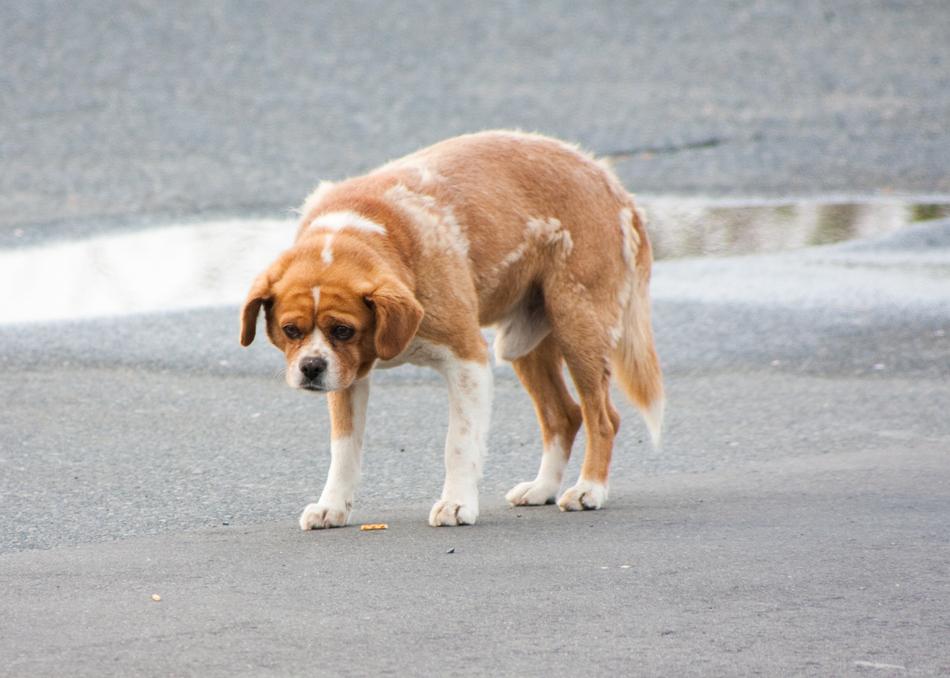 3912 50 лучших фотографий животных за 2011 год