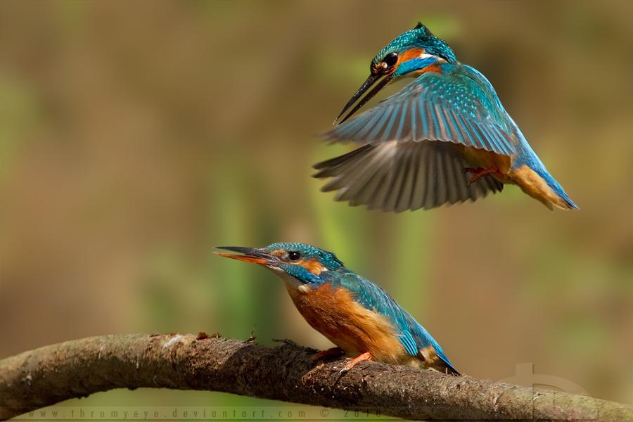 3923 40 прекрасных фотографий птиц