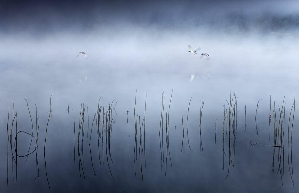 397 100 изумительных фотографий тумана (часть 2)