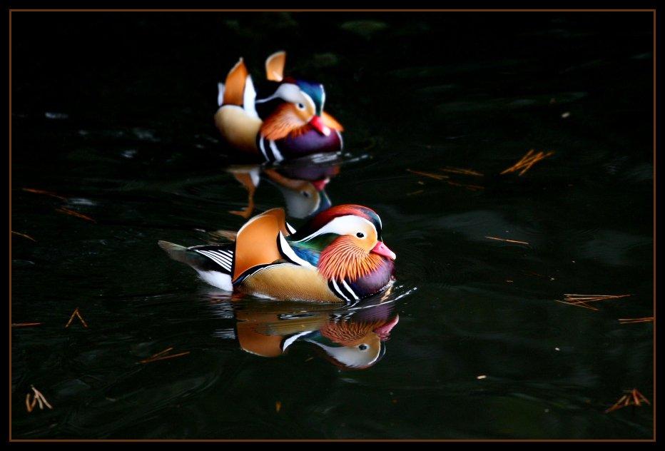 4018 40 прекрасных фотографий птиц