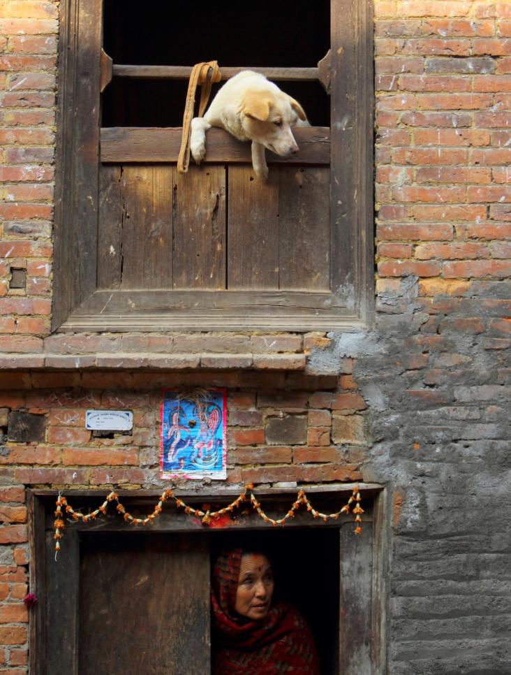 409 50 лучших фотографий животных за 2011 год