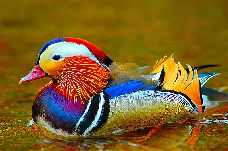 4158 40 прекрасных фотографий птиц