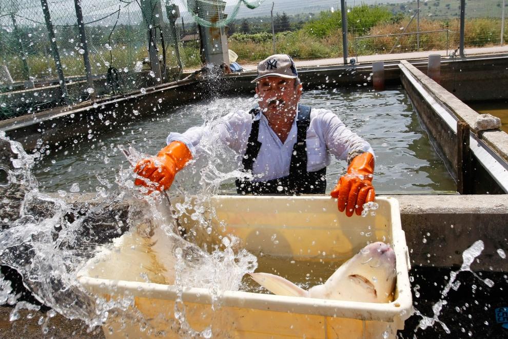 Как в Израиле выращивают черную икру