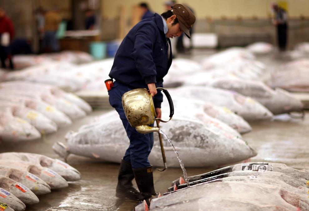 4208 Рыбный рынок Цукидзи