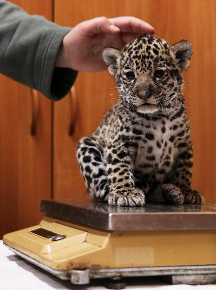 4216 50 лучших фотографий животных за 2011 год