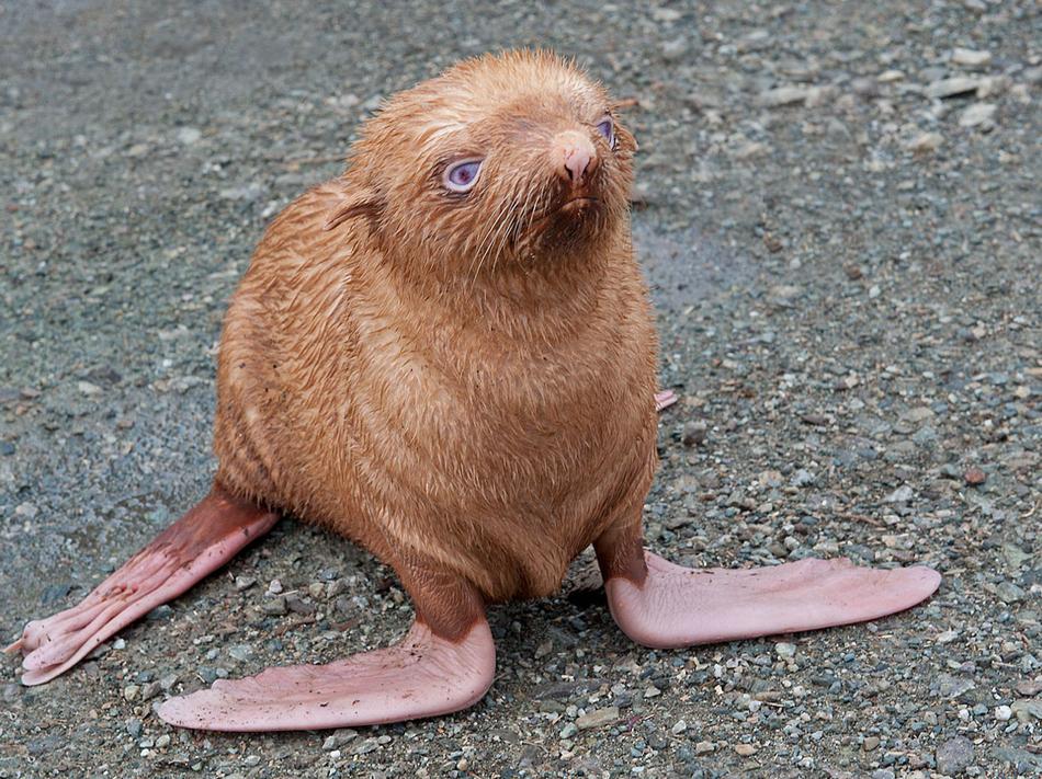 4314 50 лучших фотографий животных за 2011 год