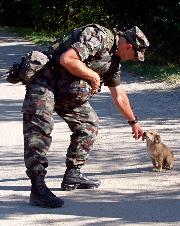 4412 50 лучших фотографий животных за 2011 год