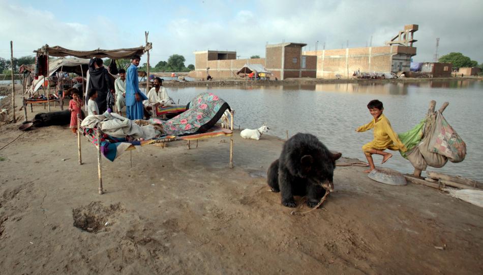 4512 50 лучших фотографий животных за 2011 год