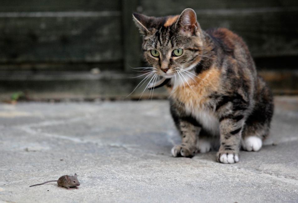 4610 50 лучших фотографий животных за 2011 год