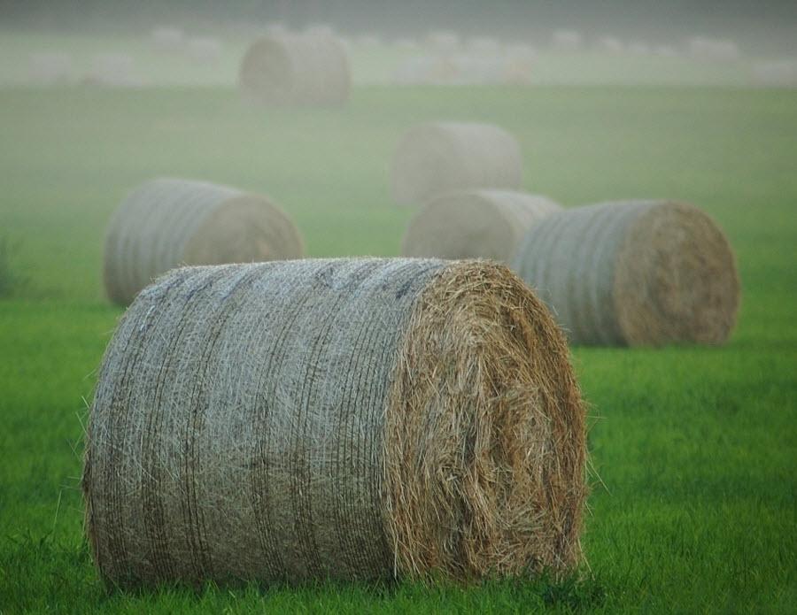 466 100 изумительных фотографий тумана (часть 2)