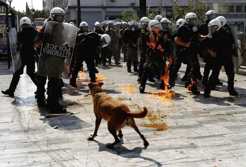 496 50 лучших фотографий животных за 2011 год